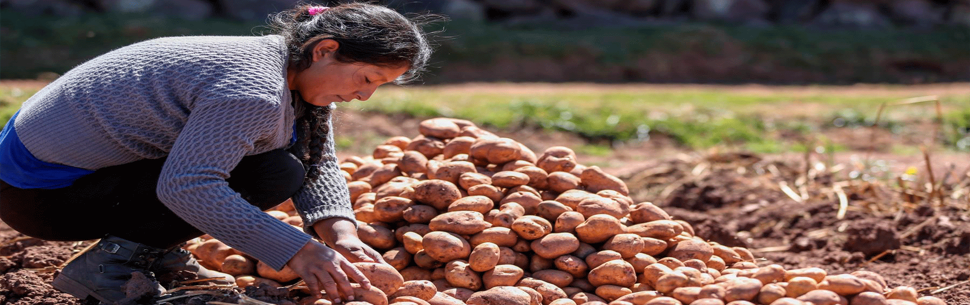Producción agropecuaria se incrementó 3.64% en enero del 2020