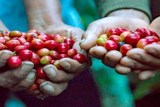 Seis consejos para hacer más rentable la producción de café