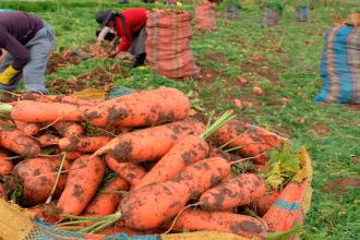 Agrobanco prevé reinsertar financieramente a 9,000 agricultores del país