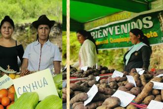 Cusco: Distrito de Santa Teresa apertura carnaval con exposición agropecuaria