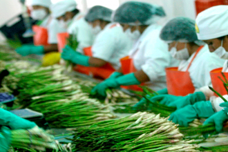 Perú es primer exportador mundial de arándanos, espárragos y quinua